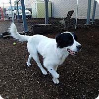 Adopt A Pet :: CAPTAIN - Phoenix, AZ