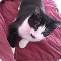 Adopt A Pet :: Emmie - Chilhowie, VA