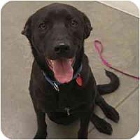 Adopt A Pet :: Landon - Phoenix, AZ