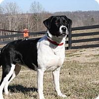Adopt A Pet :: Reba - Jacksboro, TN