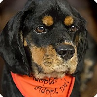 Adopt A Pet :: Mika - Pierrefonds, QC