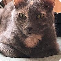 Adopt A Pet :: Mama Cat - Seminole, FL