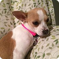 Adopt A Pet :: Ivy - Huntsville, AL