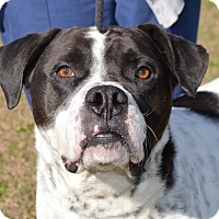 Adopt A Pet :: PETEY - Glenburn, ME