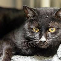 Adopt A Pet :: Grumpy170451 - Atlanta, GA