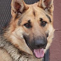 Adopt A Pet :: Horst von Himmel - Los Angeles, CA