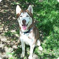 Adopt A Pet :: Jacob - Antioch, IL