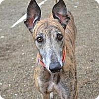 Adopt A Pet :: Kyle (Backwood Kyle) - Chagrin Falls, OH