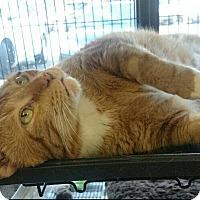 Adopt A Pet :: Simba - Edmonton, AB