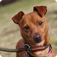Adopt A Pet :: Red - Surrey, BC