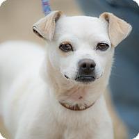 Adopt A Pet :: EMMET - Poway, CA