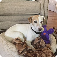 Adopt A Pet :: Sophie - San Francisco, CA