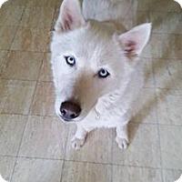 Adopt A Pet :: Zeno - Blue Bell, PA