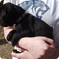 Adopt A Pet :: Nara - Lincoln, NE