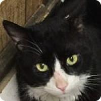 Adopt A Pet :: Lex - Medford, MA