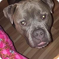 Adopt A Pet :: Mack - Villa Park, IL
