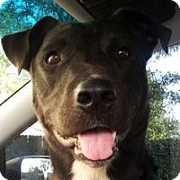 Adopt A Pet :: Roscoe - Georgetown, KY