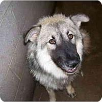Adopt A Pet :: Lobo - Scottsdale, AZ