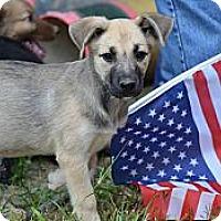 Adopt A Pet :: Cider - New Boston, NH