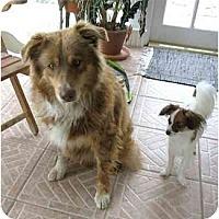 Adopt A Pet :: Cash - Orlando, FL