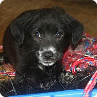 Adopt A Pet :: Tyler - Morgantown, WV