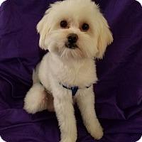 Adopt A Pet :: MARLEY - Covina, CA