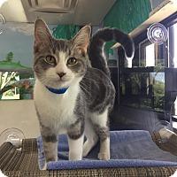 Adopt A Pet :: Brady - Battle Creek, MI