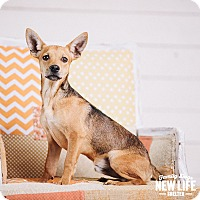 Adopt A Pet :: Bobby - Portland, OR