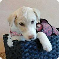 Adopt A Pet :: Flake - Barnesville, GA