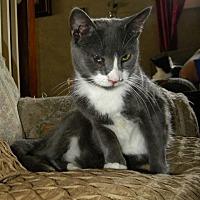 Adopt A Pet :: Jordan - Audubon, NJ