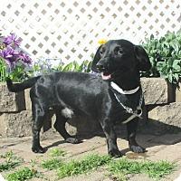 Adopt A Pet :: Parkin - West Chicago, IL