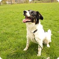 Adopt A Pet :: Cooper - West Allis, WI