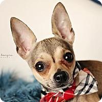 Adopt A Pet :: Peppers - Nashville, TN
