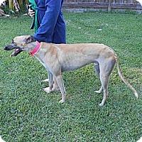 Adopt A Pet :: Ronnie - Vidor, TX