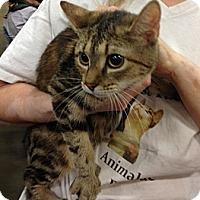 Adopt A Pet :: Lana - Pittstown, NJ