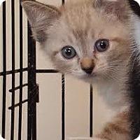 Adopt A Pet :: Josh - Irvine, CA