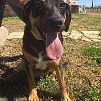 Adopt A Pet :: Larry - Beaumont, TX