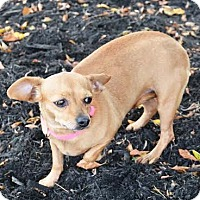 Adopt A Pet :: Maddison - Union City, TN