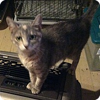 Adopt A Pet :: Magnolia - Mt Pleasant, PA