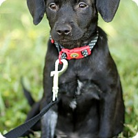 Adopt A Pet :: CHICA - San Antonio, TX