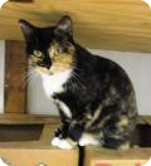 Domestic Mediumhair Cat for adoption in Stuart, Virginia - Meryl