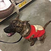 Adopt A Pet :: Marloo - Ijamsville, MD