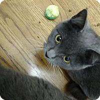 Adopt A Pet :: Smokey Bear - Atlanta, GA