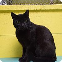 Adopt A Pet :: Chef - Pottsville, PA