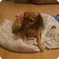Adopt A Pet :: BOBBY - Modesto, CA