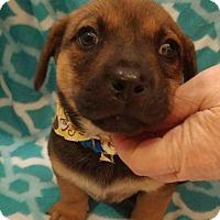 Adopt A Pet :: May - Baton Rouge, LA