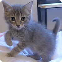 Adopt A Pet :: Thumper - Manning, SC