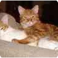 Adopt A Pet :: Cuba - Scottsdale, AZ