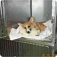 Adopt A Pet :: Chipper - Inola, OK