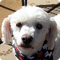 Adopt A Pet :: Kickstand - Oakley, CA